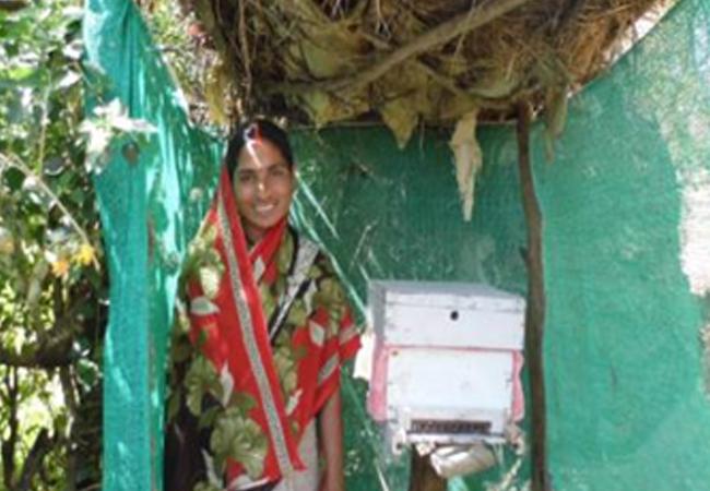 Kavita Yaduvanshi, Beekeeper